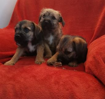 new born puppies - Dogs & Puppies, Rehome Buy and Sell