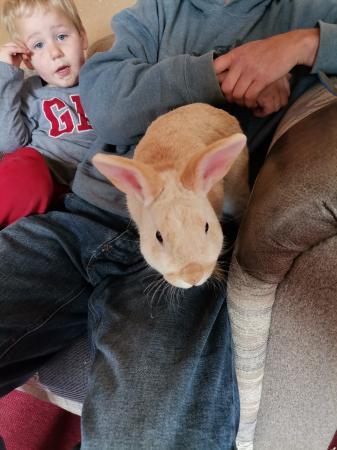 Image 1 of rabbit