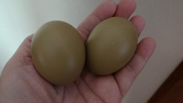 Preview of the first image of Olive egg layers hens.