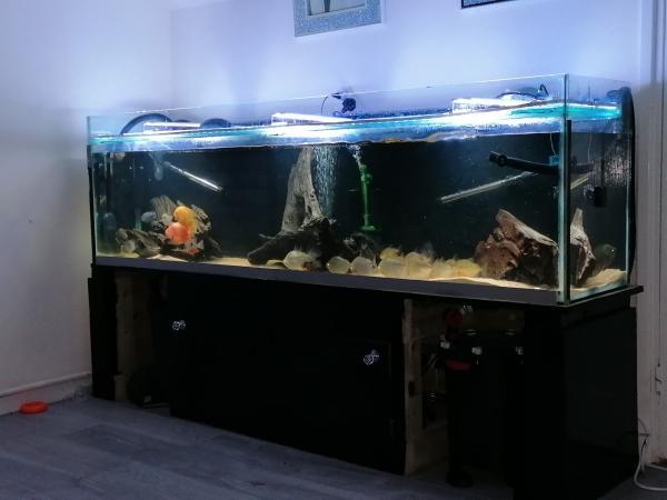 Image 1 of 7ft fish tank aquarium