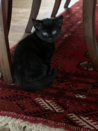 Image 4 of Kittens for sale
