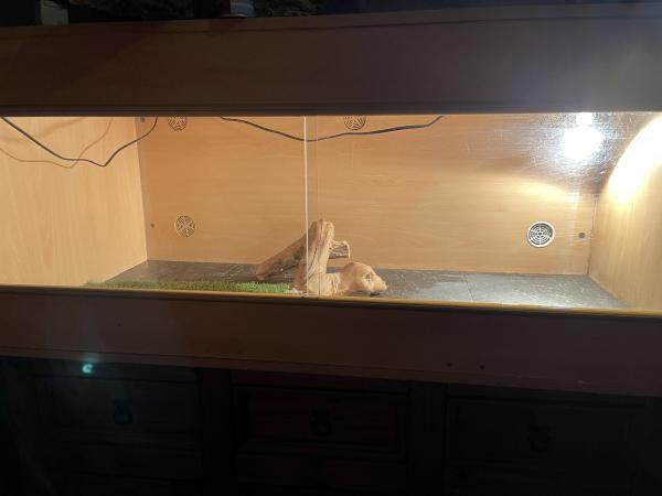 Image 1 of Vivarium