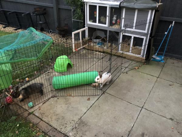 Image 2 of 2 female rabbits with hutch and run