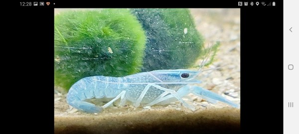 Image 1 of tropical fish
