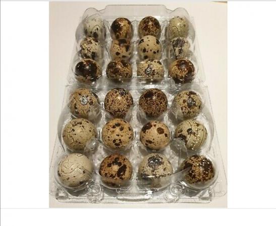 Image 1 of celadon fertile eggs available