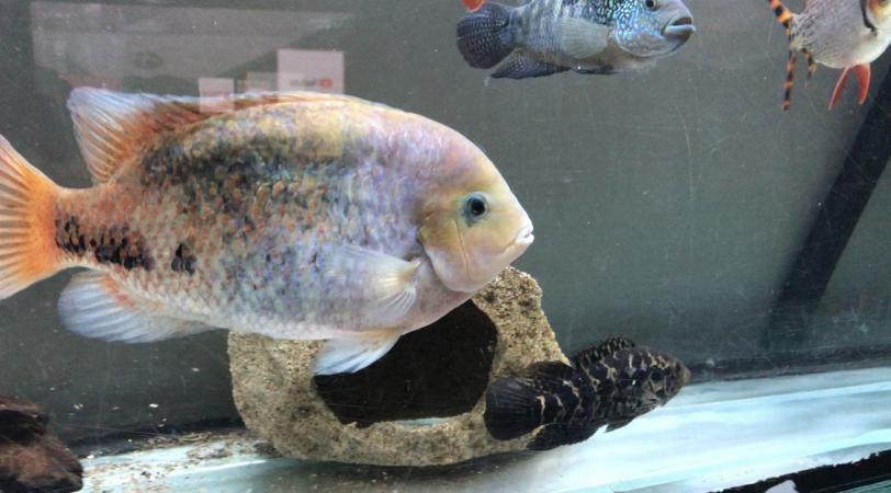 Image 1 of Fish for sale