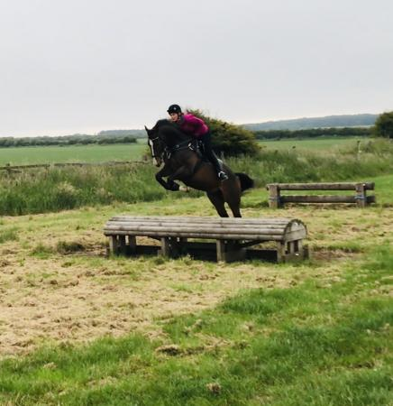 Image 3 of 16.2 Gelding for part loan