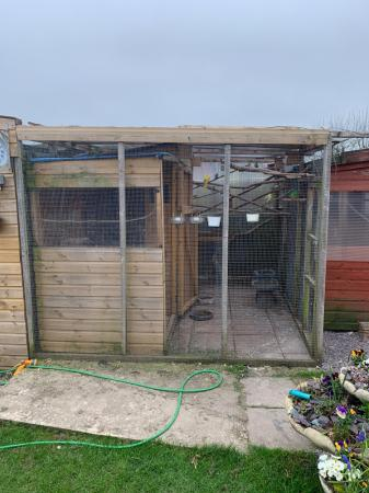Image 2 of We adopt and rehome your birds