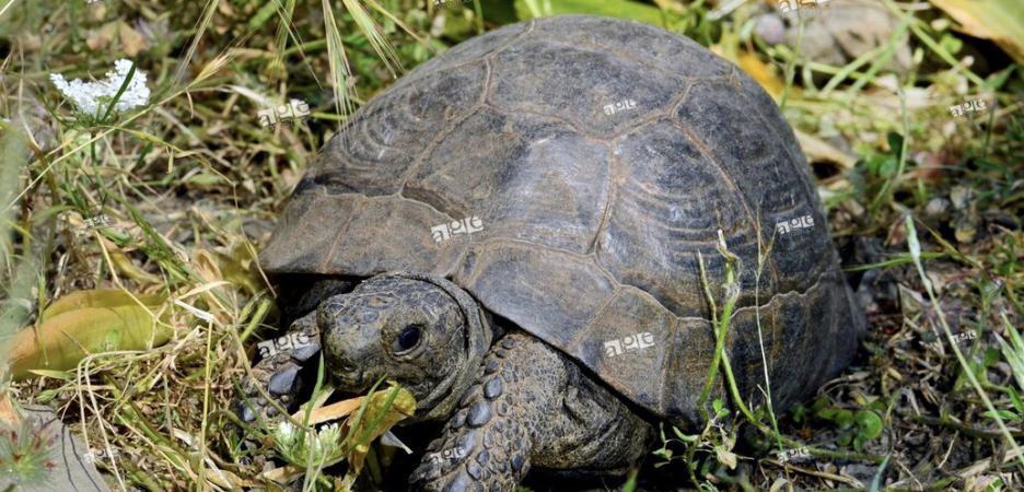 Image 15 of Tortoise Rescue Centre