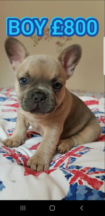 Dogs & Puppies, Rehome Buy and Sell   Preloved