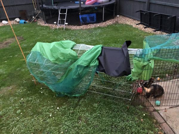 Image 3 of 2 female rabbits with hutch and run