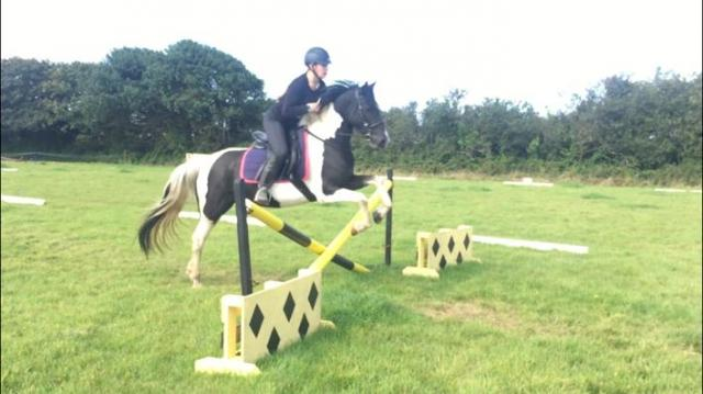Preview of the first image of 6Yr Old Pony club prospect REDUCED!.