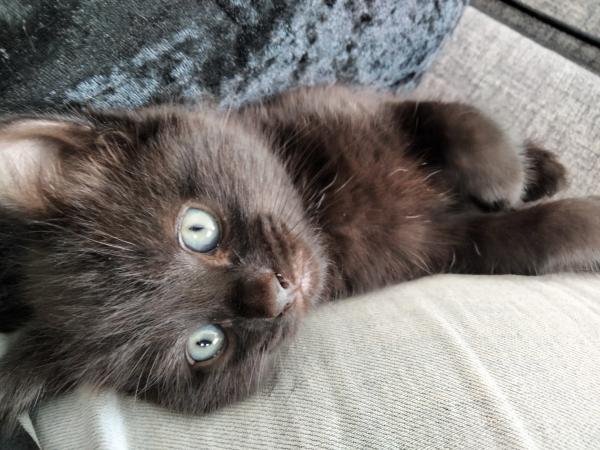 Image 7 of Black kittens