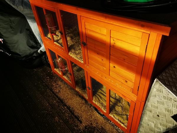 Image 1 of ferrets and cage
