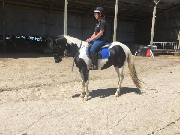 Image 6 of 6Yr Old Pony club prospect REDUCED!