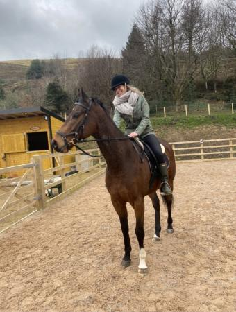 Image 1 of Experienced rider wanted for part share