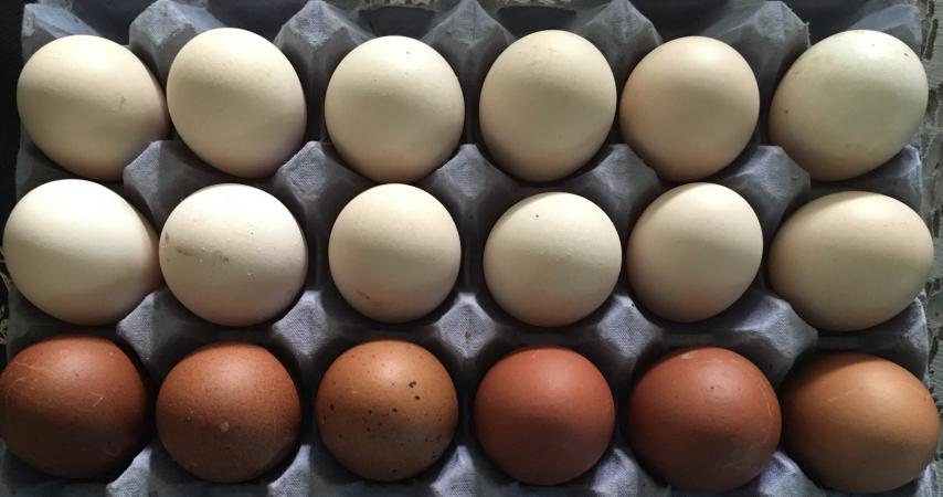 Image 2 of Mixed Chicken Hatching Eggs