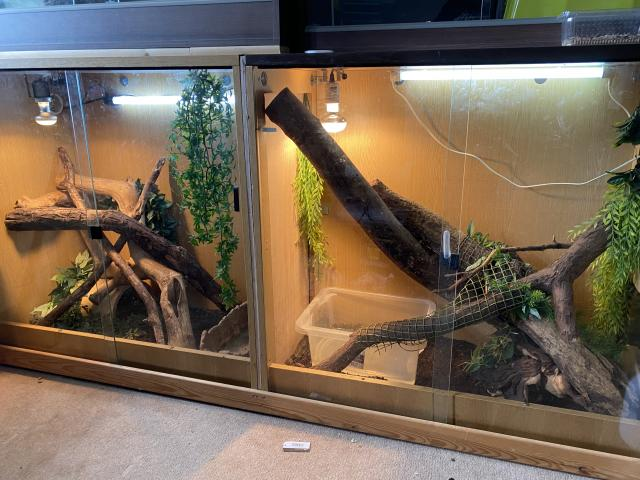 Preview of the first image of Chinese water dragons.