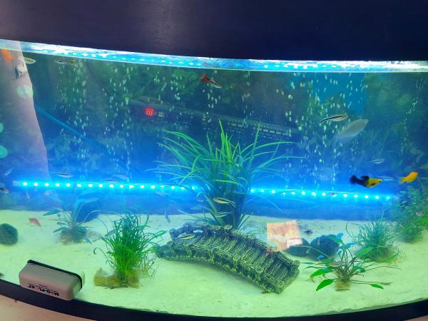 Image 2 of ***Fish Rehoming***