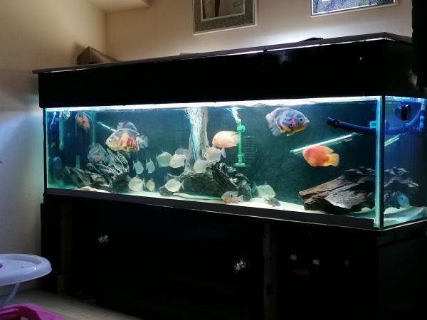 Image 2 of 7ft fish tank aquarium