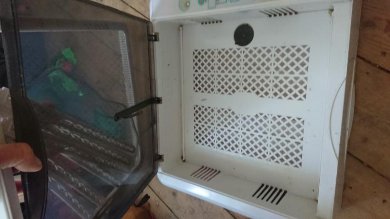 Image 4 of incubator