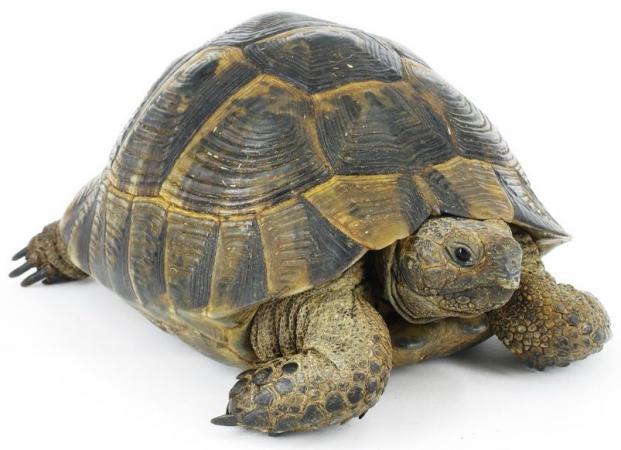 Image 11 of Tortoise Rescue Centre