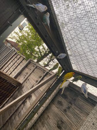 Image 1 of wanted aviary birds