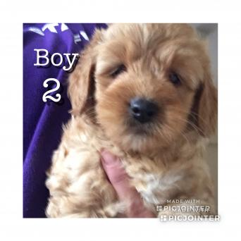 Dogs & Puppies, Rehome Buy and Sell | Preloved