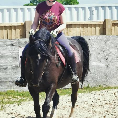 Image 3 of 13'3/14hh welsh for part share