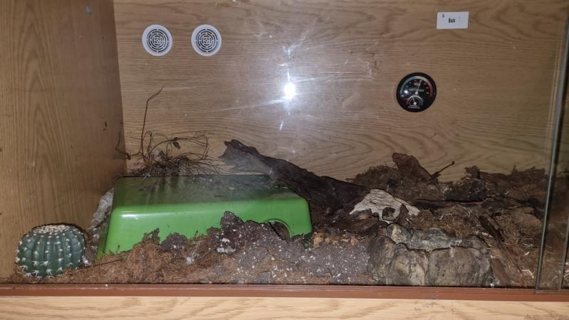 Image 3 of 4ft Wooden Vivarium. Reptile, bearded dragon, leopard gecko.