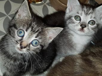 Cats & Kittens, Rehome Buy and Sell | Preloved