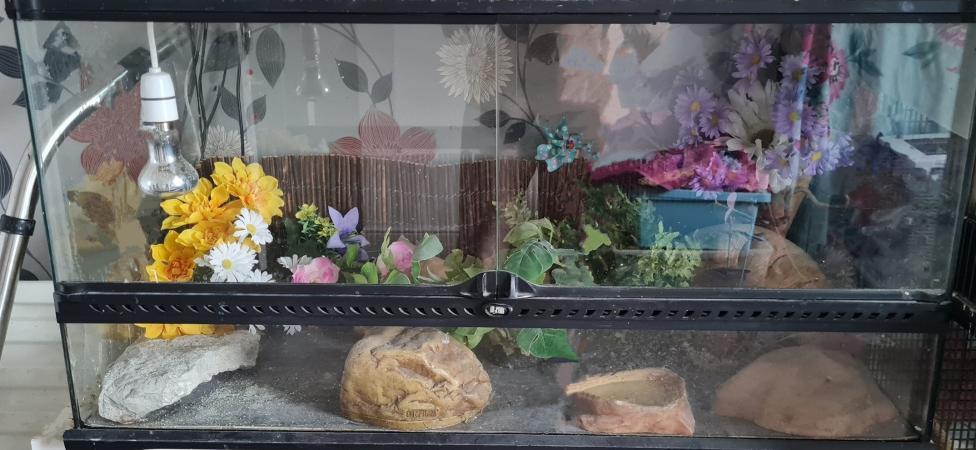 Image 1 of exoterra glass terrarium/vivarium