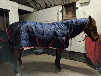 New Shires 400g Snug Rug Combo Le 7 3