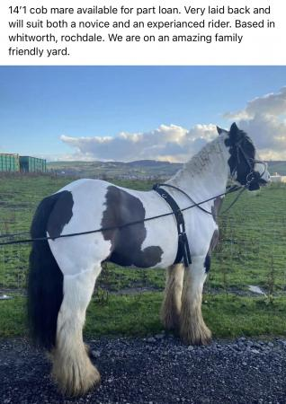 Image 1 of 14'1 cob mare for part loan