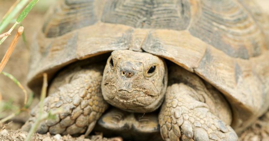 Image 13 of Tortoise Rescue Centre