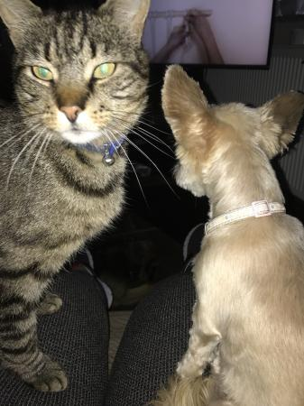 Image 1 of STANLEY MISSING  SINCE 30/11/2017 TABBY NEUTERED MALE CAT
