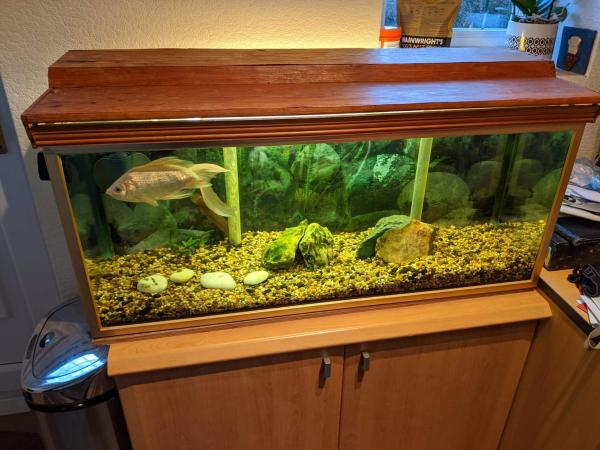 Image 1 of Fish tank, Fish and all contents